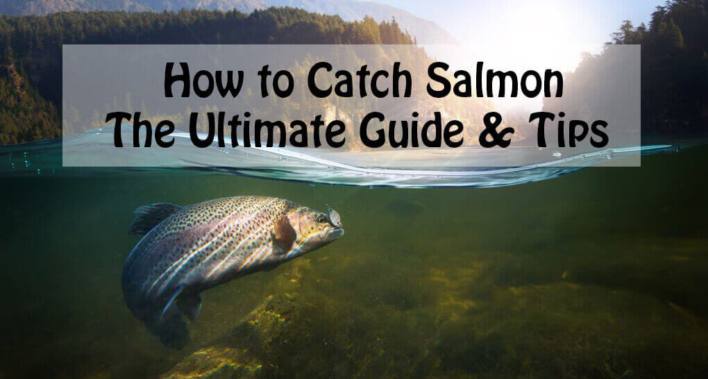 How to Catch Salmon The Ultimate Guide & Tips