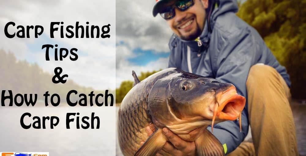 Carp Fishing Tips