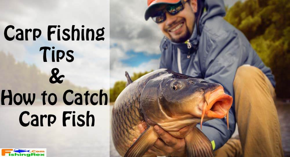 Carp Fishing Tips How To Catch Carp Fish