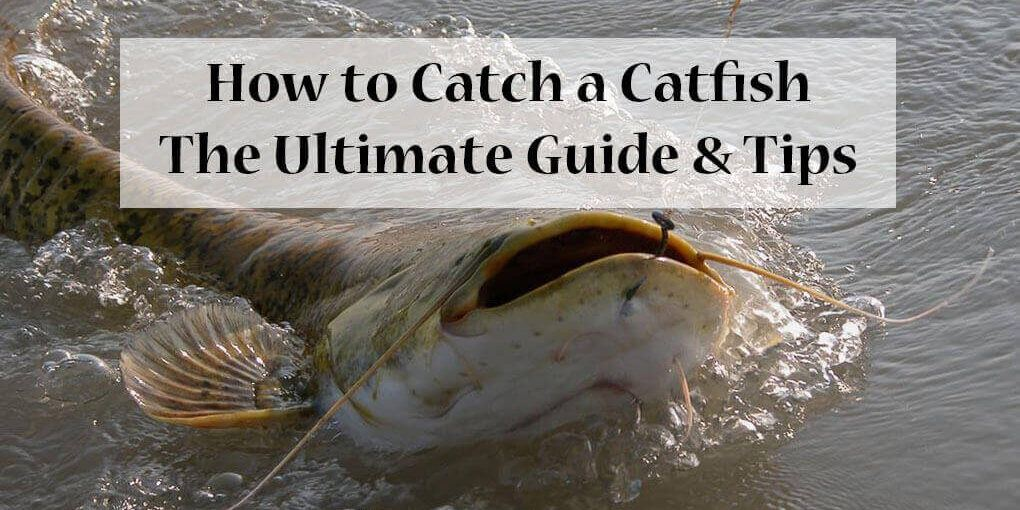 How to Catch a Catfish: The Ultimate Guide & Tips