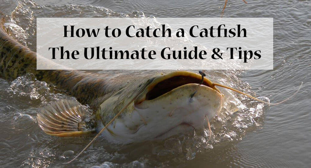 How to catch a catfish the ultimate guide tips for How to catch a fish